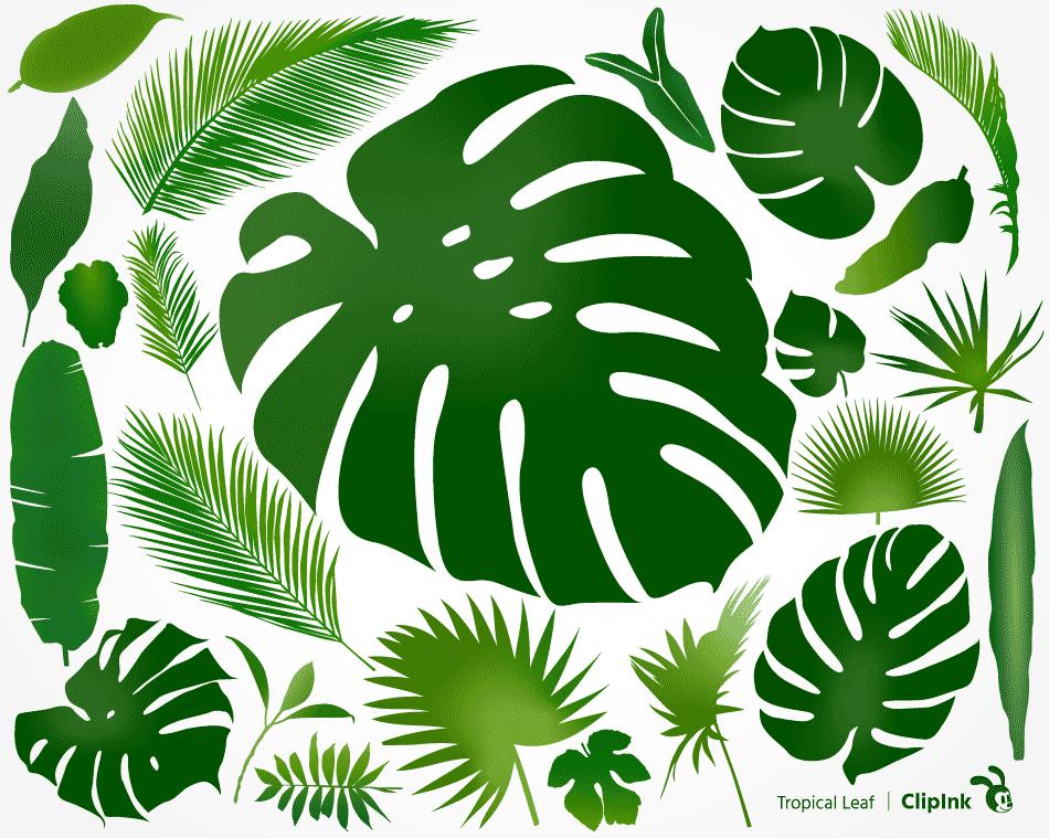 Monstera Svg Tropical Leaves Svg Svg Png Eps Dxf Pdf Clipink Hibiscus flowers illustration, flower bouquet decorative arts, tropical flower, herbaceous plant, blue png. tropical leaf